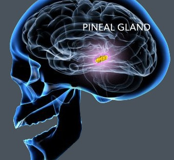 what is the pineal gland a k a third eye and how to reactivate it