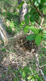 birds nest, nest, nature, spring time, earth day